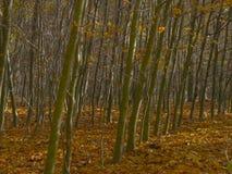 Σειρές των δέντρων το φθινόπωρο Στοκ Εικόνα