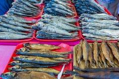 Σειρές των αποξηραμένων ψαριών Στοκ φωτογραφία με δικαίωμα ελεύθερης χρήσης