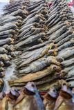 Σειρές των αποξηραμένων ψαριών Στοκ Φωτογραφίες