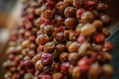 Σειρές των μικρών πιπεριών τσίλι Στοκ εικόνες με δικαίωμα ελεύθερης χρήσης