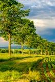Σειρές των νέων πράσινων εγκαταστάσεων σε έναν εύφορο τομέα με το σκοτεινό χώμα στη θερμή ηλιοφάνεια κάτω από το δραματικό ουρανό Στοκ Εικόνες