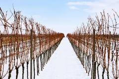 Σειρές των χειμερινών αμπελώνων στη Δημοκρατία της Τσεχίας Στοκ εικόνα με δικαίωμα ελεύθερης χρήσης
