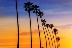 Σειρές φοινίκων ηλιοβασιλέματος Καλιφόρνιας σε Santa Barbara Στοκ Φωτογραφίες