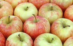 σειρές gala μήλων Στοκ εικόνα με δικαίωμα ελεύθερης χρήσης