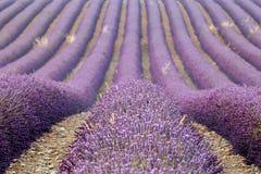 Σειρές lavenders, Προβηγκία, Γαλλία Στοκ εικόνα με δικαίωμα ελεύθερης χρήσης