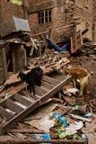 Σεισμός gaots, Κατμαντού, Νεπάλ στοκ φωτογραφίες