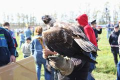 16 Σεπτεμβρίου, 2017, Τούλα, Ρωσία - ιστορικός τομέας ` φεστιβάλ ` Kulikovo: συνεδρίαση αετών στο γάντι εκτροφής γερακί Στοκ Φωτογραφίες