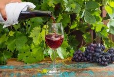 Σερβιτόρος που χύνει ένα ποτήρι του κόκκινου κρασιού, υπαίθριο πεζούλι, tastin κρασιού Στοκ εικόνα με δικαίωμα ελεύθερης χρήσης