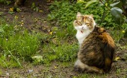 Σε έναν κήπο, μια γάτα tricolor με το κόκκινο περιλαίμιο κοιτάζει επίμονα πίσω στον παρατηρητή στοκ φωτογραφίες