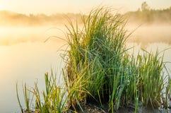 Σε έναν πράσινο χορτοτάπητα το ομιχλώδες πρωί Στοκ Εικόνες