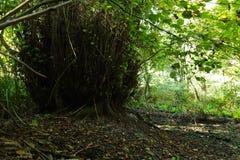 Σε ένα μυθικό δάσος λειψάνων Στοκ φωτογραφία με δικαίωμα ελεύθερης χρήσης