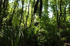 Σε ένα μυθικό δάσος λειψάνων Στοκ εικόνα με δικαίωμα ελεύθερης χρήσης