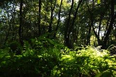 Σε ένα μυθικό δάσος λειψάνων Στοκ Εικόνες