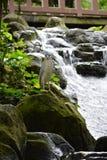 Σε ένα πάρκο βιοποικιλότητας στη Μαλαισία στοκ εικόνα
