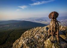 Σε ένα σκυλί κυνηγόσκυλων βράχου στοκ φωτογραφία με δικαίωμα ελεύθερης χρήσης