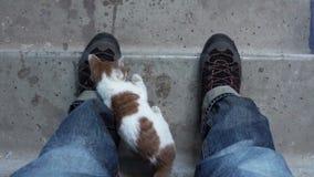 Σε αργή κίνηση βίντεο - άστεγο γατάκι στη σκάλα φιλμ μικρού μήκους
