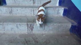 Σε αργή κίνηση βίντεο - άστεγο γατάκι στη σκάλα απόθεμα βίντεο