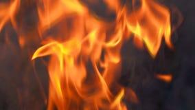 Σε αργή κίνηση κάψιμο πυρκαγιάς φλογών στο μαύρο υπόβαθρο φιλμ μικρού μήκους