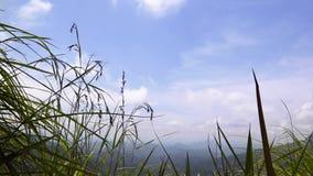Σε αργή κίνηση μήκος σε πόδηα hd Άποψη μέσω της υψηλής χλόης στο βουνό φιλμ μικρού μήκους