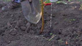 Σε σε αργή κίνηση, ο αγρότης φύτεψε ένα νέο δέντρο στον κήπο του απόθεμα βίντεο