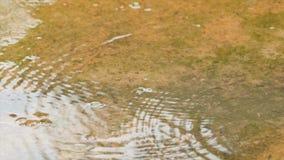 Σε αργή κίνηση πτώση βροχής στο φρέσκο και νερό φύσης απόθεμα βίντεο
