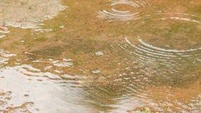 Σε αργή κίνηση πτώση βροχής στο φρέσκο και νερό φύσης φιλμ μικρού μήκους