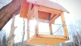 Σε αργή κίνηση της ένωσης Birdhouse σε μια σημύδα μέσα απόθεμα βίντεο