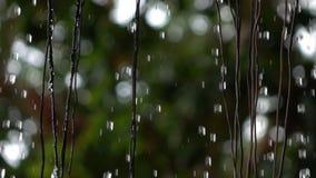 Σε αργή κίνηση της βροχής που εμπίπτει στον κήπο απόθεμα βίντεο