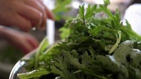 Σε αργή κίνηση της γυναίκας που πλένει το κινεζικό λαχανικό στο νεροχύτη κουζινών απόθεμα βίντεο