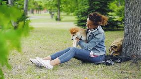 Σε αργή κίνηση του εύθυμου ιδιοκτήτη κατοικίδιων ζώων κοριτσιών ευτυχούς που χαϊδεύει, που φιλά και που αγκαλιάζει το σκυλάκι inu απόθεμα βίντεο