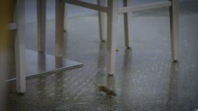 Σε αργή κίνηση το ποντίκι σπιτιών που τρέχει γύρω από τα έπιπλα της κουζίνας μέσα στο σπίτι απόθεμα βίντεο