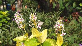 Σε αργή κίνηση των όμορφων μικρών άσπρων λουλουδιών κοντά στο τετράγωνο πόλεων του Surabaya φιλμ μικρού μήκους