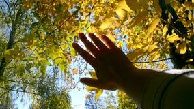 Σε αργή κίνηση POV του χεριού του ατόμου που το κινεί στον αέρα, μέσω των δάχτυλων απόθεμα βίντεο