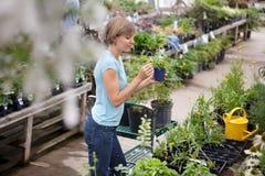 σε δοχείο γυναίκα φυτών &eps Στοκ Εικόνες