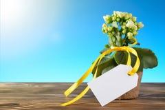 Σε δοχείο λουλούδι με το κενό κενό σημάδι Στοκ φωτογραφία με δικαίωμα ελεύθερης χρήσης