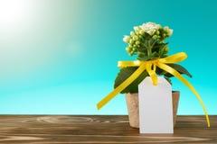 Σε δοχείο λουλούδι με το κενό κενό σημάδι Στοκ Εικόνα