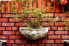 σε δοχείο τοίχος φυτών Στοκ Φωτογραφίες