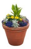 Σε δοχείο φυτά στοκ φωτογραφίες με δικαίωμα ελεύθερης χρήσης