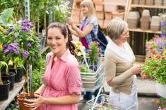 Σε δοχείο φυτό λαβής γυναικών στο κατάστημα κήπων Στοκ Εικόνα