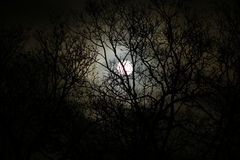 σεληνόφωτο στοκ φωτογραφίες με δικαίωμα ελεύθερης χρήσης