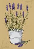 Σε δοχείο lavender Στοκ εικόνα με δικαίωμα ελεύθερης χρήσης