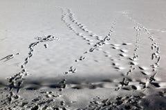 Σημάδια ίχνους και ίχνη και σημάδια σκι στο χιονισμένο τοπίο στο ST Moritz Ελβετία Στοκ φωτογραφία με δικαίωμα ελεύθερης χρήσης