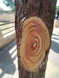 Σημάδι δέντρων Στοκ εικόνες με δικαίωμα ελεύθερης χρήσης