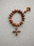 Σημάδι φύλων για αμφίφυλο που δημιουργείται με τα κοχύλια σαλιγκαριών Στοκ φωτογραφία με δικαίωμα ελεύθερης χρήσης