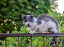 Σημάνετε την άσχημη γάτα στοκ εικόνες