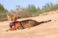Σημάνετε τη γάτα κοιτάζοντας με την υπεροψία στοκ εικόνες