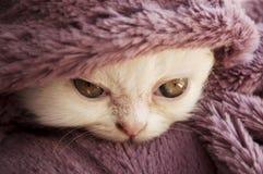 Σημάνετε το γατάκι στοκ φωτογραφίες