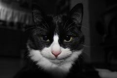 Σημάνετε το γατάκι Στοκ εικόνα με δικαίωμα ελεύθερης χρήσης