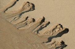 Σημάδια παλίρροιας Στοκ εικόνες με δικαίωμα ελεύθερης χρήσης