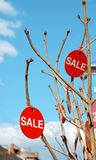 Σημάδια πώλησης που κρεμούν στους κλάδους δέντρων Στοκ φωτογραφία με δικαίωμα ελεύθερης χρήσης